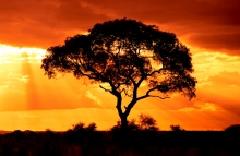 https://www.shutterstock.com/image-photo/african-tree-sunset-51394612