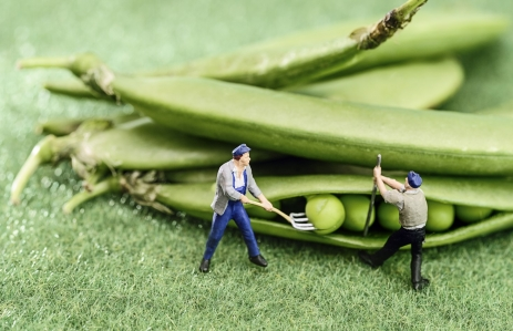 https://www.shutterstock.com/image-photo/green-bean-farmer-miniature-toy-figure-194833616