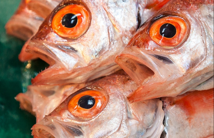 1024px-oweston_sting_fish_for_sale_at_tsukiji_fishmarket_tokyo-30