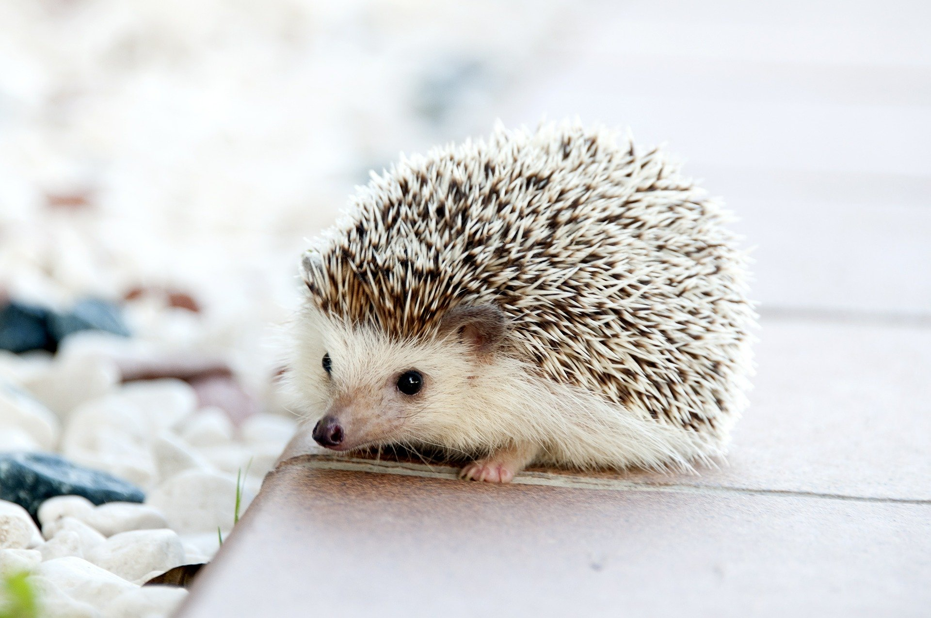 Dragonfly, Y Combinator Back Seed Round for Crypto Trading Dashboard Hedgehog