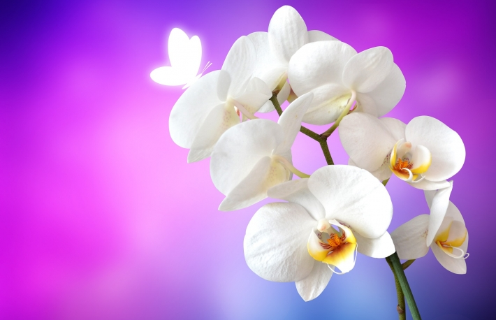 orchid-1259019_1920