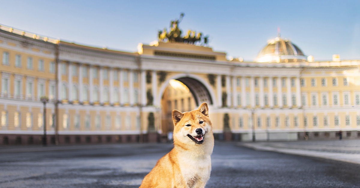 What Does Dogecoin Have to Do With Government Crypto Bans? - CoinDesk - CoinDesk