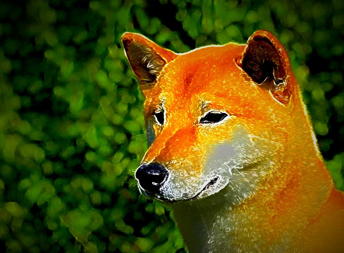 Dogecoin Hits New All-Time High After eToro Listing